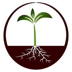 Growing plant - Illustration