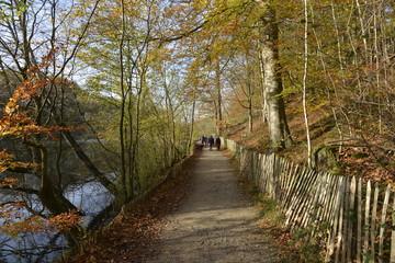 Chemin le long d'un des étangs du site de l'abbaye