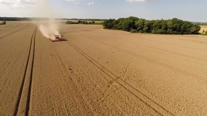Flugaufnahme von Weizenernte
