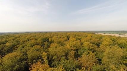 Flug über Herbstwald
