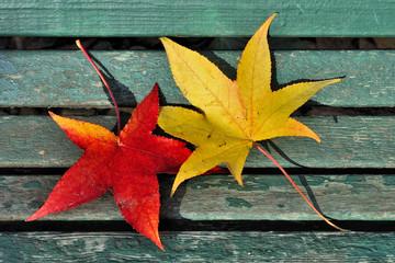 due foglie gialle e rosse in autunno