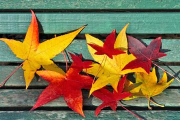 foglie gialle e rosse in autunno
