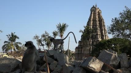 Monkeys near Virupaksha Temple