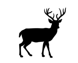 Reindeer Profile Shillouette