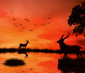 Silhouettes two deers against orange sunset skyline background
