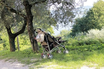 empty stroller in nature with olive trees