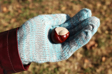 Hands in gloves holding chestnut on natural background