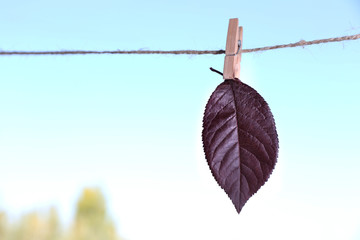 Leaf hanging on rope on natural background