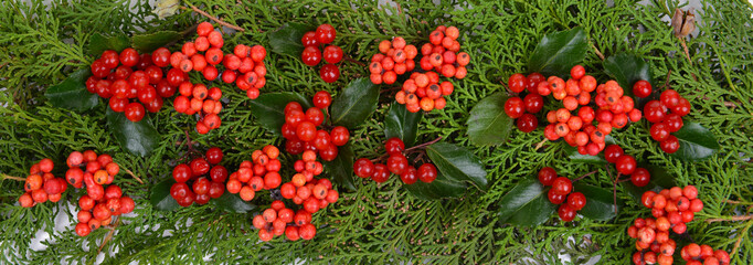 Beautiful Christmas border from fir and mistletoe