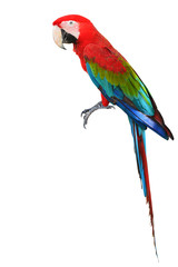 Colorful Red-and-green Macaw bird