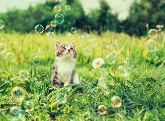 Kitten looking at soap bubbles in summer