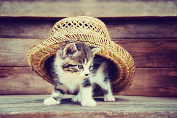 Kitten under the hat