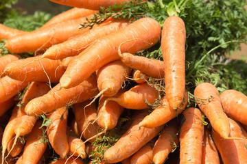 carottes bio du potager