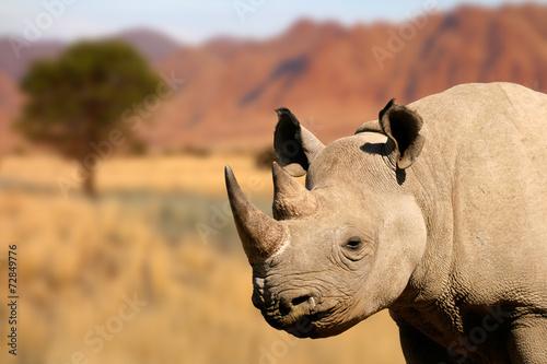Foto op Canvas Neushoorn Portrait of a black rhinoceros
