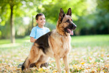 close up of German Shepherd Dog in the park,boy in background