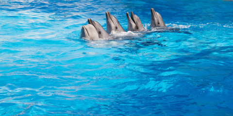 Dolphins dancing Lambada