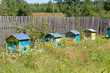 Obrazy na płótnie, fototapety, zdjęcia, fotoobrazy drukowane : Multi-colored wooden beehives on a rural apiary