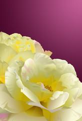 Hintergrund mit gelben Rosen