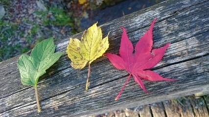 Blätter ampel