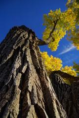 Herbstlicher Baum in Santa Fe