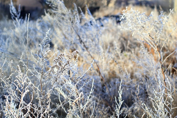 grass in winter snow frost hoarfrost