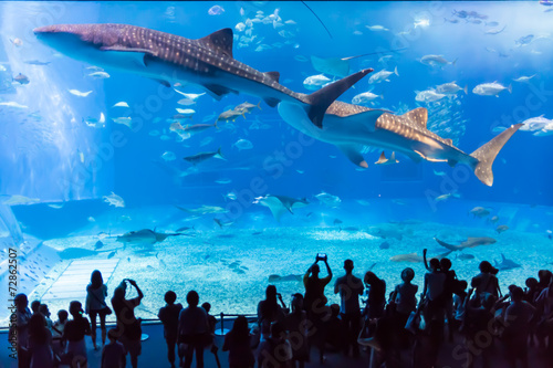 Foto op Plexiglas Japan 水族館