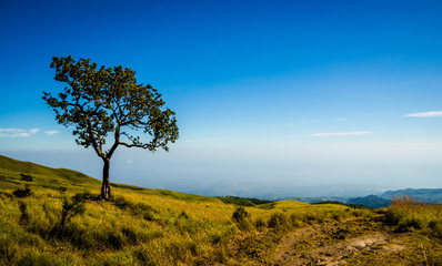 Tree on the hill with blue sky