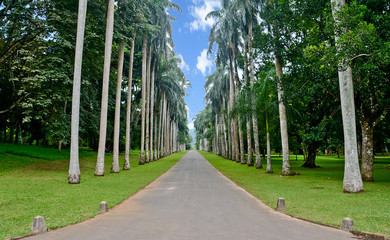Royal Botanical Garden, Peradeniya Sri Lanka