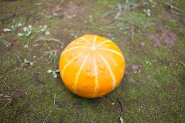 orange pumpkin on ground
