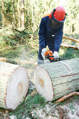 Lumberjack cutting tree in forest