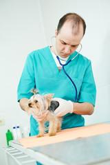 Veterinarian surgeon treating dog
