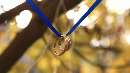 wedding rings on a blue ribbon on a tree