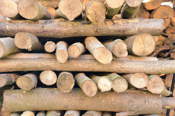 Brennholz 3