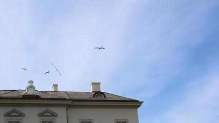 Herring gulls flying and landing on the chimney