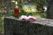 Rosen auf dem Grabstein