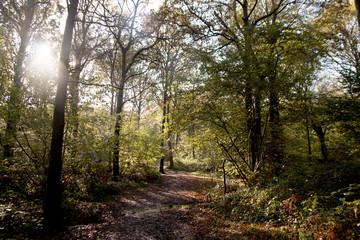 Path through wet woodland