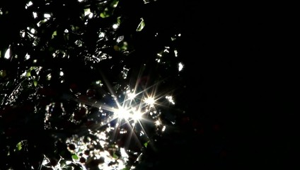Sonnenstrahlen glitzern durch die Blätter an einem Baum