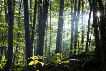 Forest at sunrise