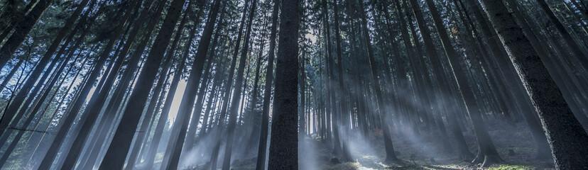 an autumn forest and fog
