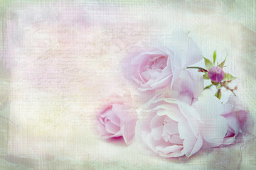 Pink rose .Textured conceptual image.