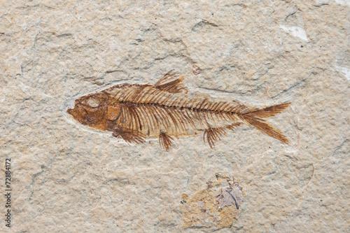 fossil fish - 72884172