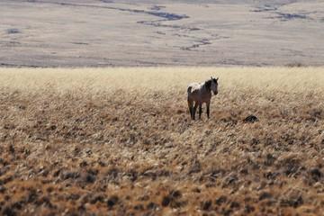 Pferd auf einer Farm in der Namib