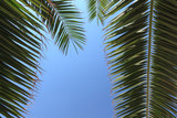 palm leaves encircling a blue sky left out as copy space