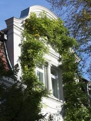 Grün umrankte Fassade einer Villa in Oerlinghausen bei Detmold