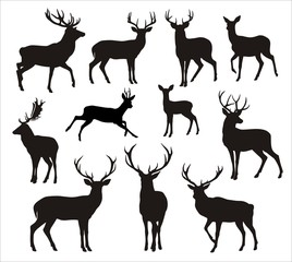 Graphic silhouettes of wild deers – male, femail and  roe deer