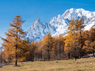 The forest and the snowy peaks of Mont Blanc in fall