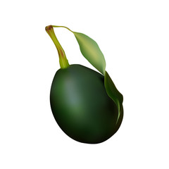 avocado. Large green fruit with stalk and leaves