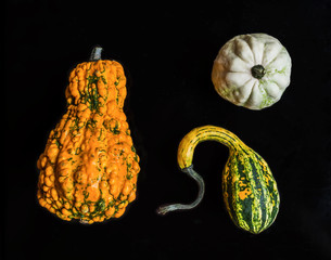 Pumpkins of crazy shapes on a black
