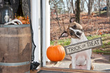 Halloween Dog Trick or Treating poster