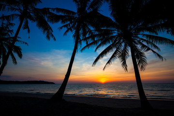 beach in sunset time. palm trees silhouette on sunset tropical b